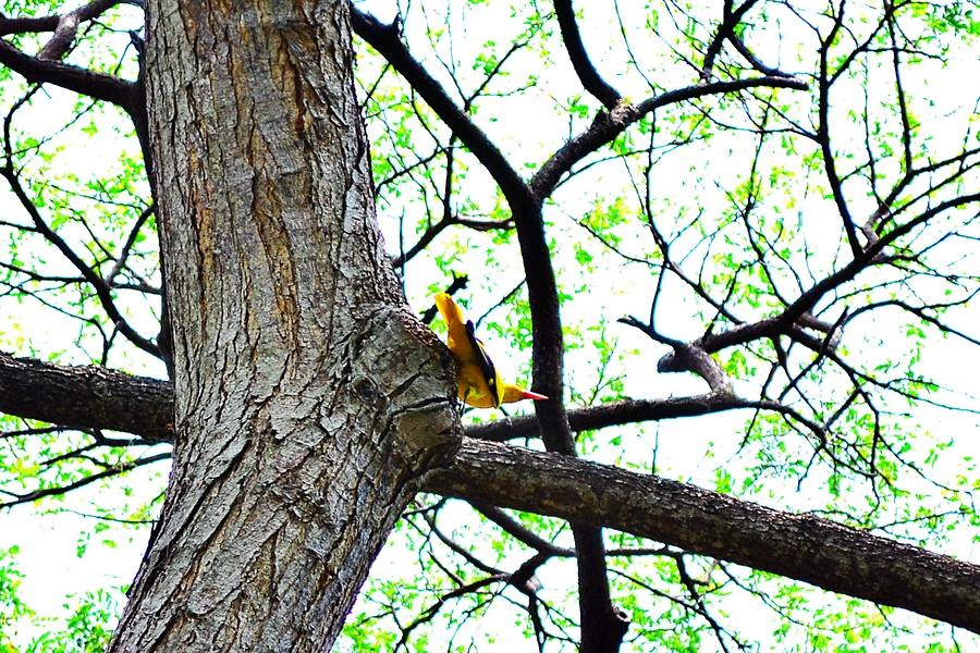 Тропическая птица в парке в Сингапуре