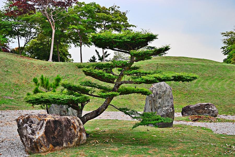 Китайское дерево