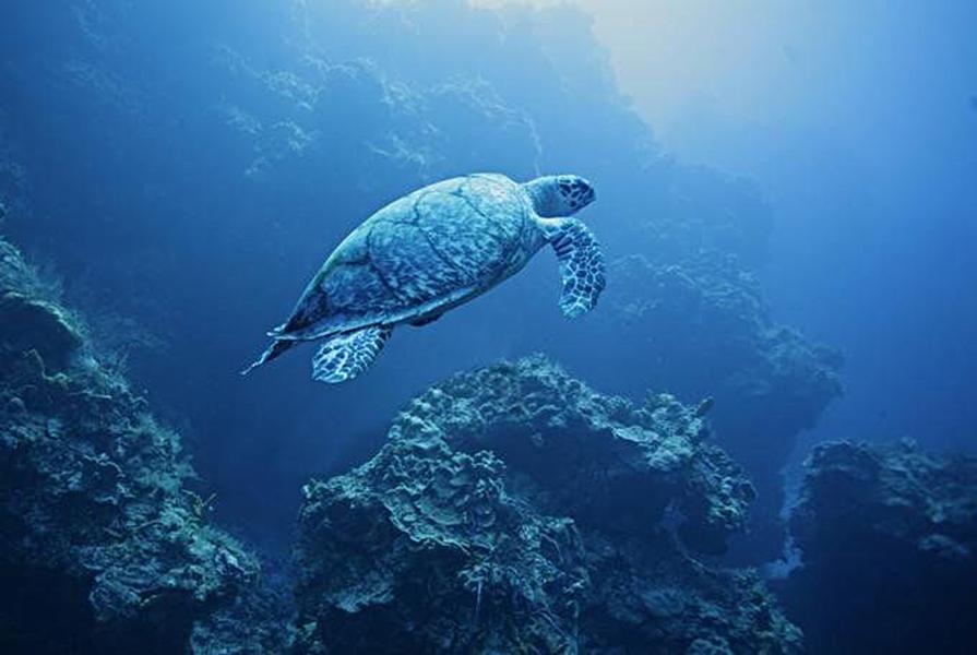 остров Баликасаг / остров черепах