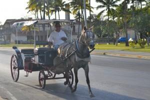 лошадиное такси
