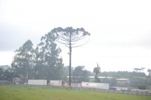 дерево необычной формы
