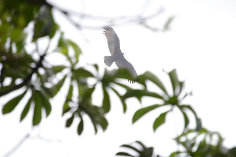 орел в национальном парке Игуасу
