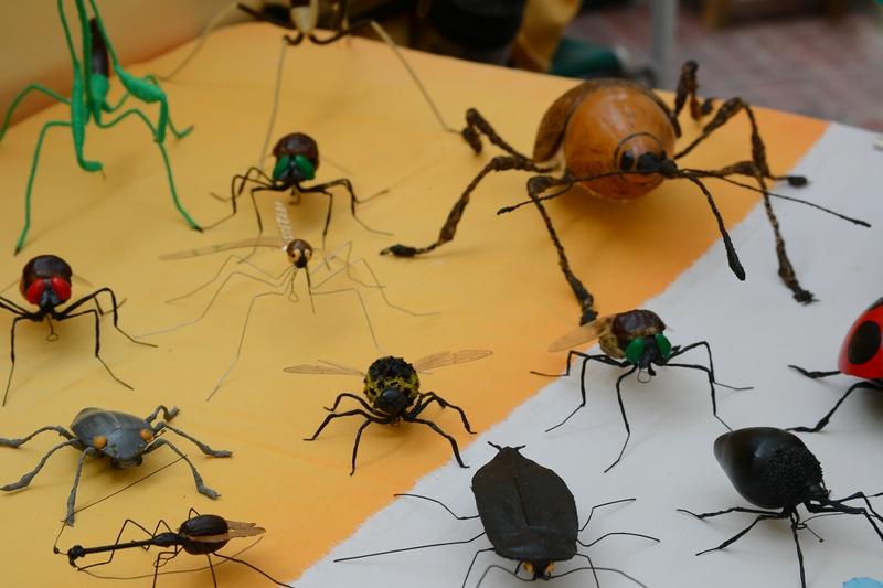 насекомые, которых можно встретить в Аргентине