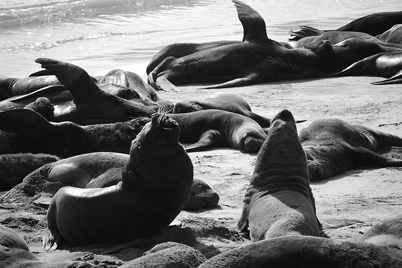 seals in Mar del Plata