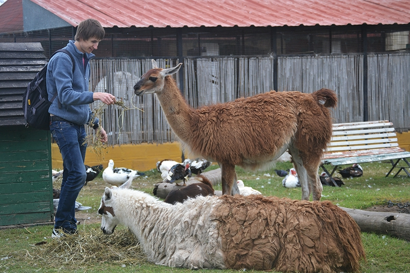 Farm in Republica de los Ninos