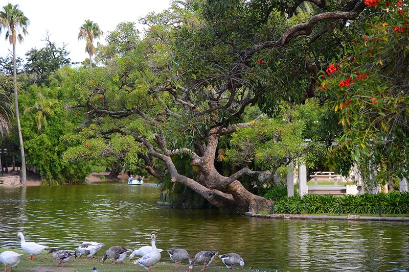 гуляющие птицы в парке