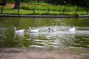 пруд в парке района Palermo