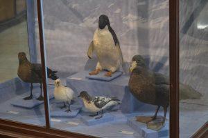 музей La Plata - чучела птиц