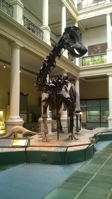 Скелет динозавра в музее La Plata