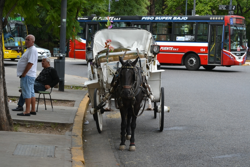 horse with carriage in Palermo