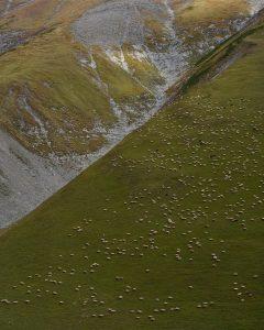 Пасущееся стадо овец