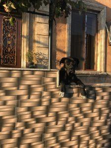 Собака наблюдает за прохожими в одном из двориков Кутаиси